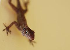 http://flickr.com/photos/yasmapaz/1534540297/