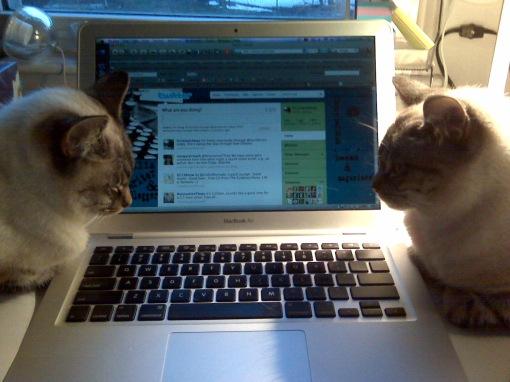 Clara & Sadie